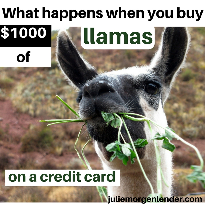 What happens when you buy $1000 of llamas on a credit card